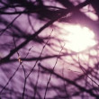 Early Morning Sunlight Shines Through Bare Tree Branches on a Cold Winter Morning as Abstract Natural Background, Handheld full HD footage with Shallow DOF and Subtle Camera Movement. — Stock Video #68932637
