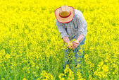 Farmer Standing in Oilseed Rapseed Cultivated Agricultural Field — Stock Photo