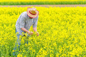 Farmer Standing in Oilseed Rapeseed Cultivated Agricultural Fiel — Stock Photo
