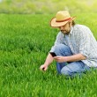 Farmer Taking Photo of Young Wheat Cultivation Field — Stock Photo #71293705