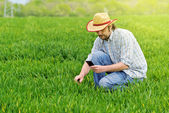Farmer Taking Photo of Young Wheat Cultivation Field — Stock Photo