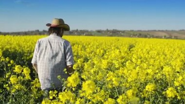 Male Farmer in Oilseed Rapeseed Cultivated Agricultural Field Examining and Controlling The Growth of Plants, Crop Protection Agrotech Concept — Stock Video