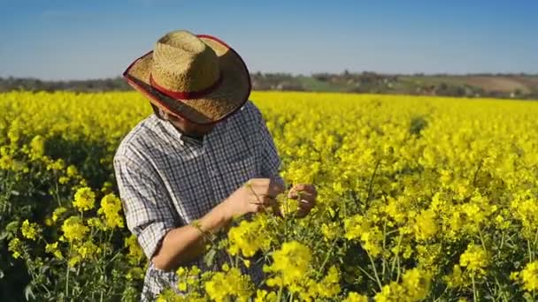 Male Farmer in Oilseed Rapeseed Cultivated Agricultural Field Examining and Controlling The Growth of Plants, Crop Protection Agrotech Concept — Vídeo de stock