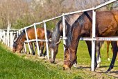 Herd of Beautiful Young Horses Graze on the Farm Ranch — Stock Photo