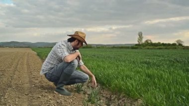 Farmer Examines and Controls Young Wheat Cultivation Field, Crop Protection Concept — Stock Video