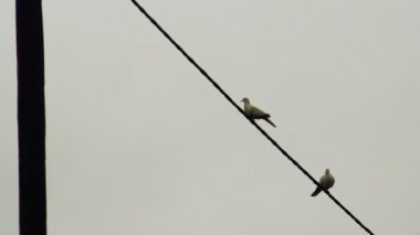 Pair of Doves Flying Away from Electric Wire — ストックビデオ