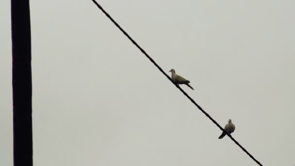 Pair of Doves Flying Away from Electric Wire — Vídeo de stock