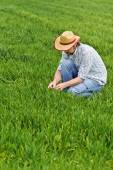Farmer Examines and Controls Young Wheat Cultivation Field — Stock Photo
