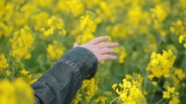 Hand of Female Farmer in Oilseed Rapeseed Cultivated Agricultural Field Examining and Controlling The Growth of Plants, Crop Protection Concept — Stock Video