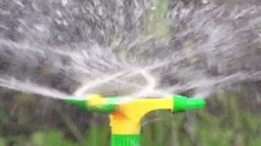 Irrigation Sprinkler Watering Vegetable Garden — Stock Video