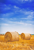 Hay bale rolls in field — Stock Photo