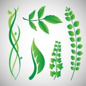 Natural Design Elements — Vetorial Stock