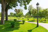 Beautiful spring green park — Stock Photo