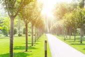 :Long alley in the green park — Стоковое фото