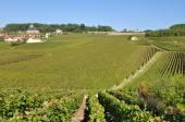 Champagne landscape (France) — Stock Photo