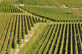 Champagne vineyard (France) — Stock Photo