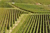 Champagne vingård (frankrike) — Stockfoto