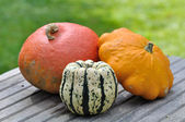 Varieties of pumpkins — Stock Photo