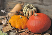 Autumnal vegetable — Stock Photo