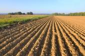Furrows in land — Stock Photo