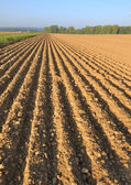 Furrow in land — Stock Photo