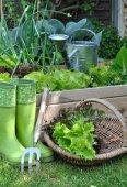 Basket salad in garden  — Stock Photo