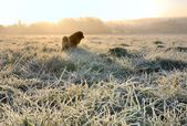 Dog in grass covered with frost — Stock Photo