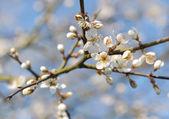 Pretty flower on twig — Stock Photo