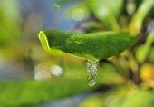 Drop of water frozen — Stock Photo