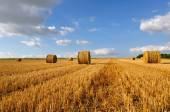 Golden bales in field — Stock Photo