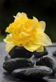 Kwiat na czarne kamyki — Zdjęcie stockowe