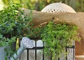 Zahrada v létě — Stock fotografie