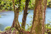 Vivid blue Rio Celeste — Stock Photo