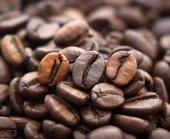Grãos de café closeup fundo — Foto Stock