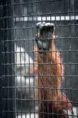 Orangutan hand on a cage cell — Stock Photo
