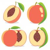 Vector peaches — Stock Vector