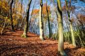 Autmn forest — Stock Photo