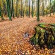 Autmn forest — Stock Photo #59803037