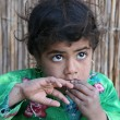 Arabic, bedouin child in Egypt — Stock Photo #69313181