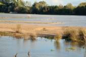 Edge of the Loire — Stock Photo