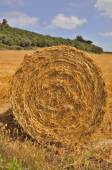 Round straw bales in harvested fields  — Stock Photo