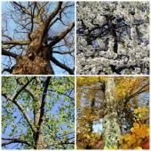Set of four seasons trees — Stock Photo