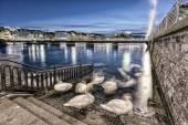 Schwäne Schatten am Genfer See und Brücke, Schweiz — Stockfoto