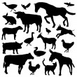 Set of farm animals silhouette — Stock Photo #68291391