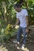Farmer with wheelbarrow transporting bananas — Photo