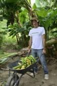 Farmer with wheelbarrow transporting bananas — Stock Photo