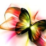 Beautiful butterfly — Stock Photo #52950529