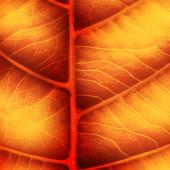 Brillante foglia d'autunno — Foto Stock