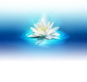 Bright lily   — Stock Photo