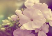 Beyaz çiçekler — Stok fotoğraf